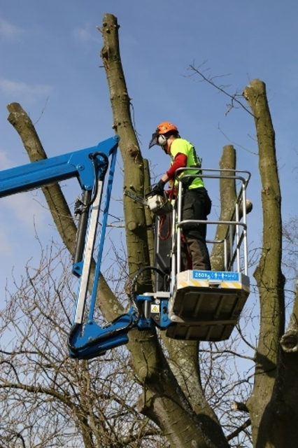 Person carrying out tree maintenance