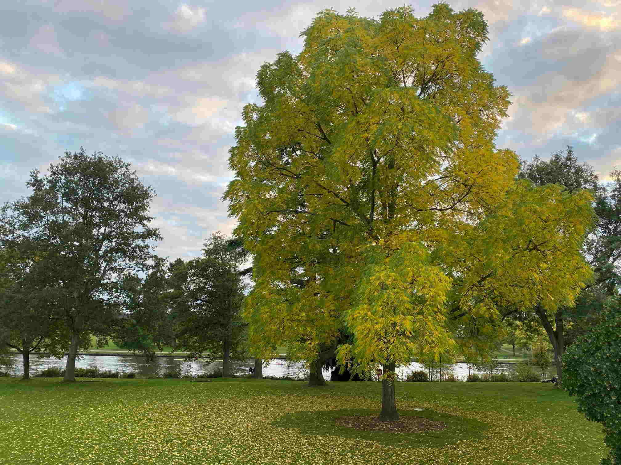 Green Flag Award 2021 recognition for two of Reading's most popular green spaces